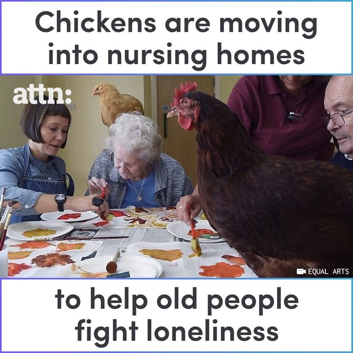 Into the Wild Festival news: Chickens are helping senior citizens fight loneliness in a major way