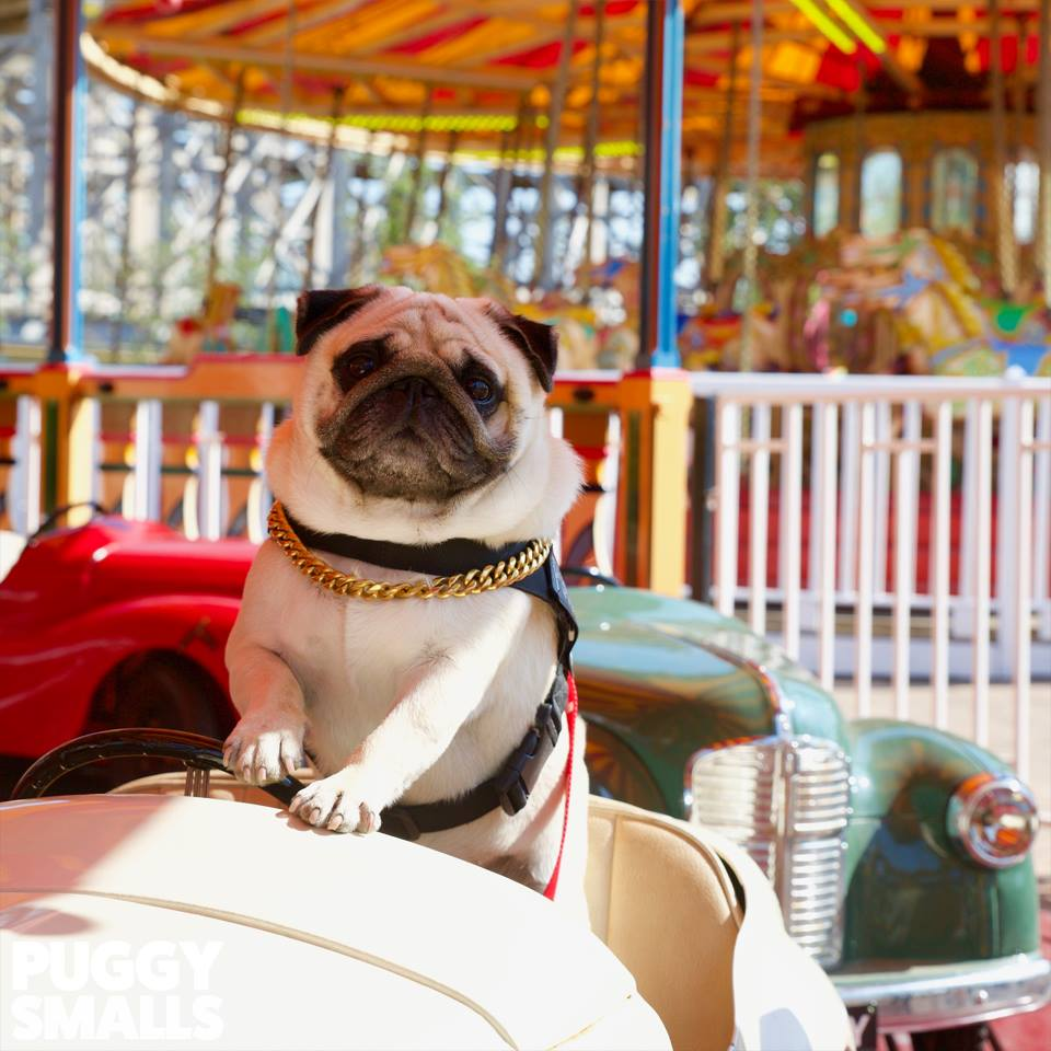 By the Sea news: Throwback to when Puggy Smalls visited Dreamland this summer!…
