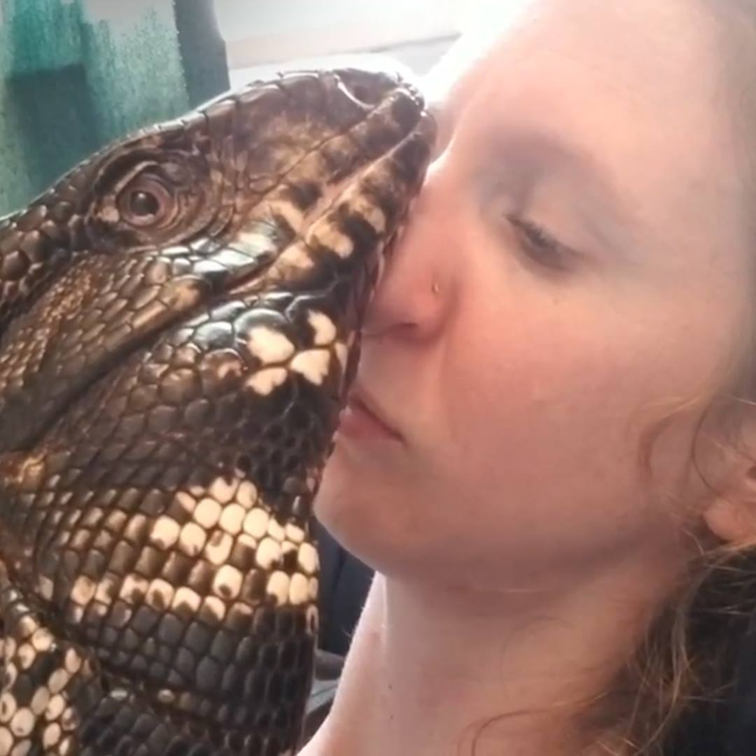 Into the Wild Festival news:  Giant Lizard And His Mom Have The Sweetest Bond