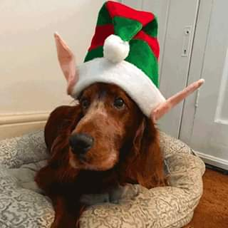 There's only 4⃣ days to go until #Christmas and our furry friends are rea...