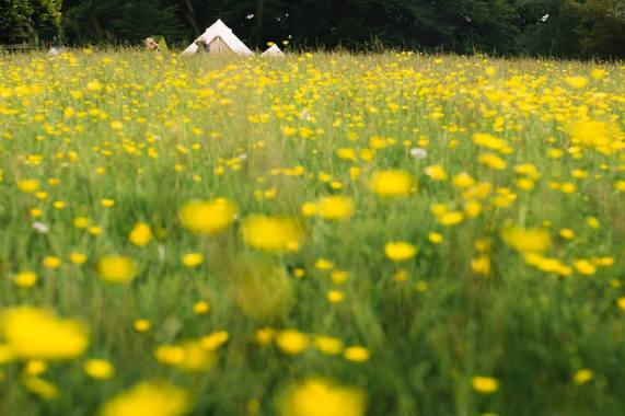 Eden Festival news : Peaceful Camping…