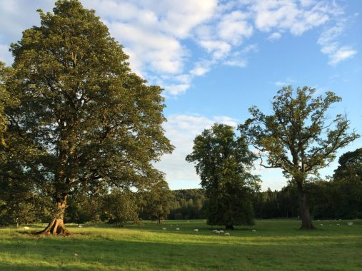 Electric Fields news :  It sure is a lovely place for a festival and a pretty nice place to spend a Jul…