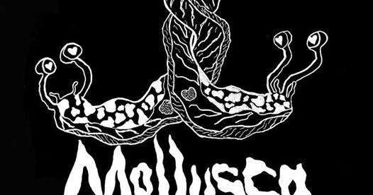 Mollusca at Deerstock 2019!
