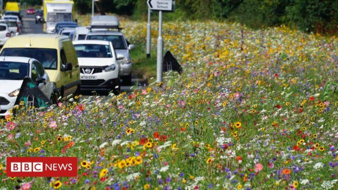 Into the Wild Festival news: Why are England's roadsides blooming?